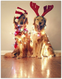 dogsinlights 235x300 Ideas For Cute & Clever Christmas Card Photos
