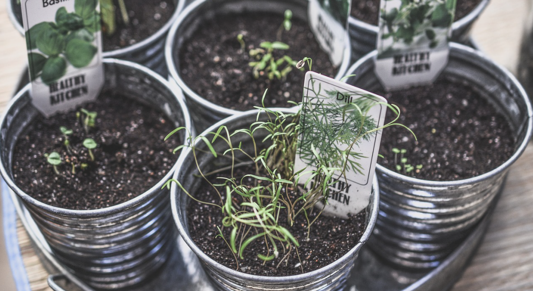 Mini Herb Garden Gift