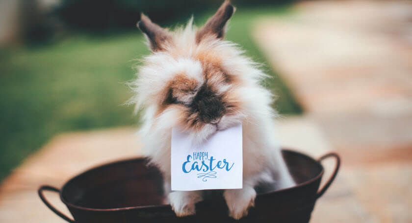 Easter Puns & Easter Sayings